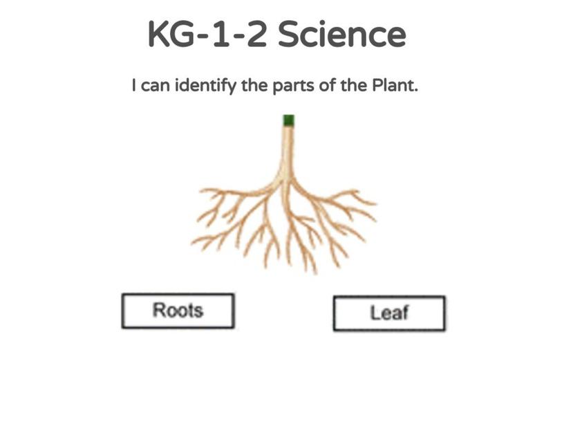 KG-1-2 Science 25/04/2021 by Vantage KG