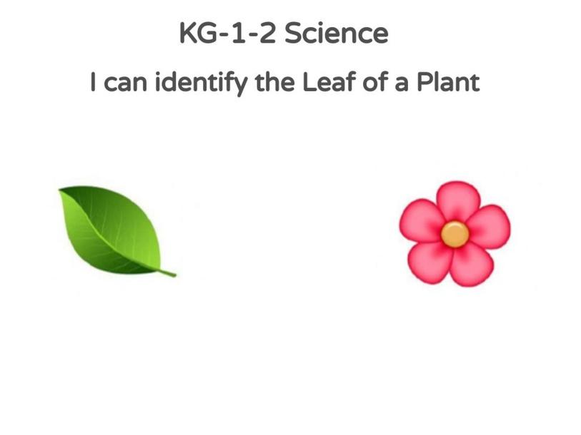 KG-1-2 Science 27/04/2021 by Vantage KG