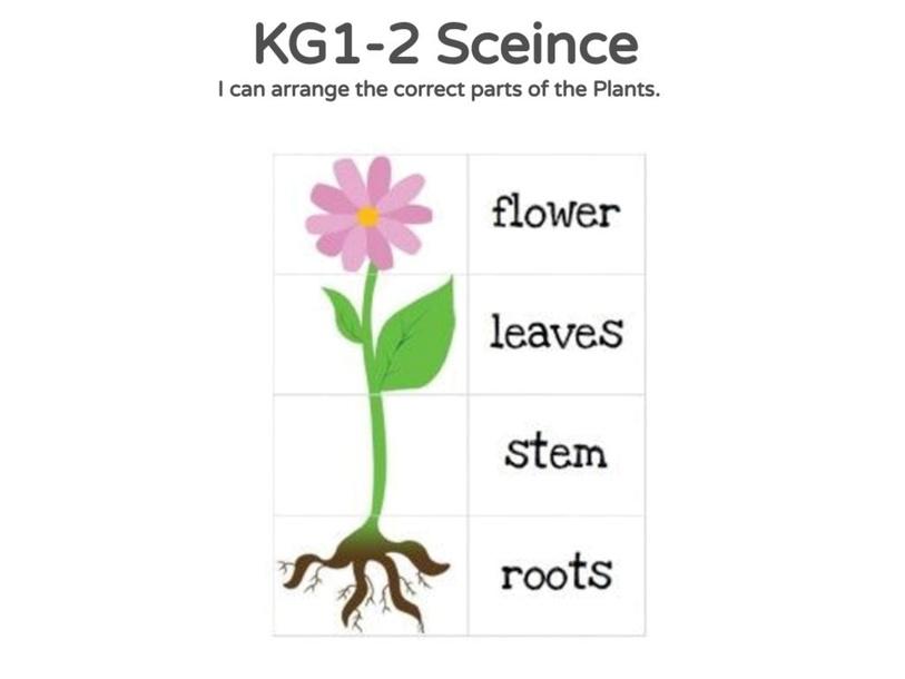KG1-2 Science 27/04/2021  by Vantage KG