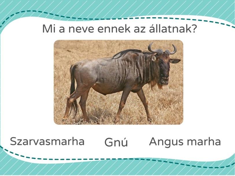 KÜLÖNLEGES FAJOK by Adorjáni Edit