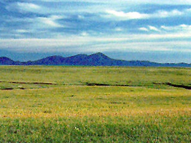 KS Grassland Savannah by Sarah Bosch