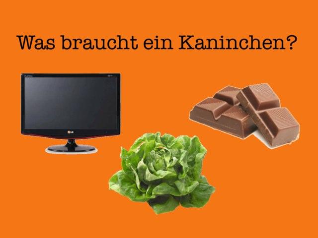 Kaninchenquiz 1 by Schüler GESS