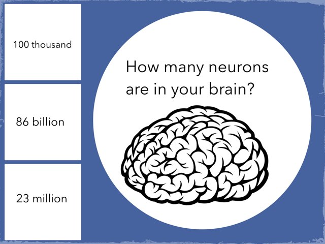 Kenna's Brain Facts by Shelley Baker