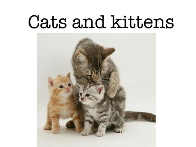 Kittens Part 1 by Salma Diab