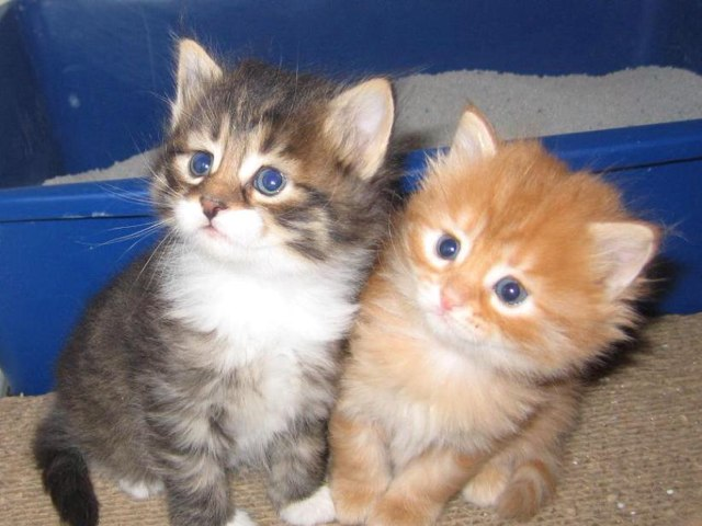 Kittens by Savannah Stevens