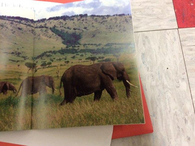 Kyra Elephants by Keegan scelia