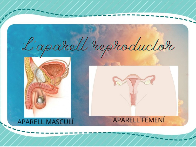 L'APARELL REPRODUCTOR by Sandra Mayoral