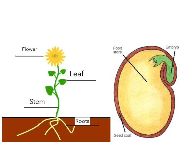 Label The Parts Of A Plant And Seed by Susan Borland