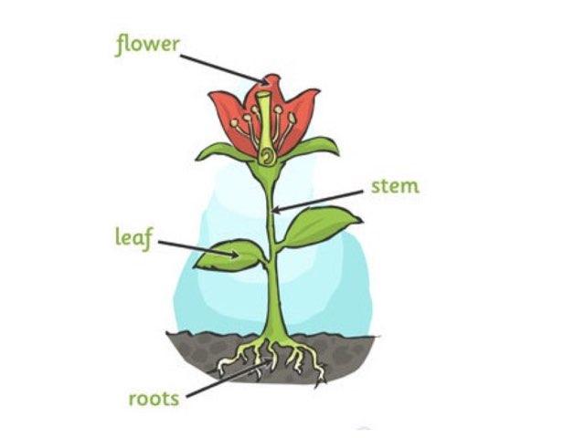 Label The Plant by Deborah Fletcher
