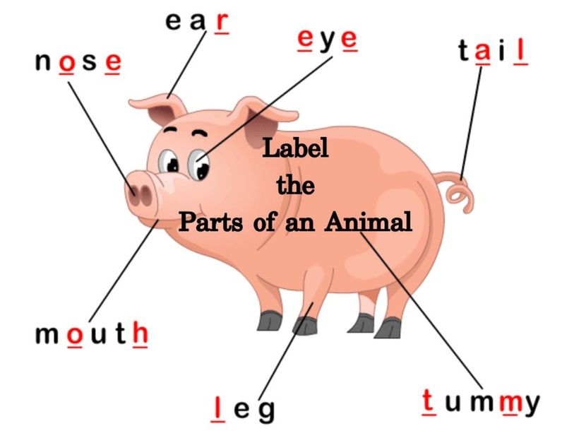 Label Animal Parts by Amber West
