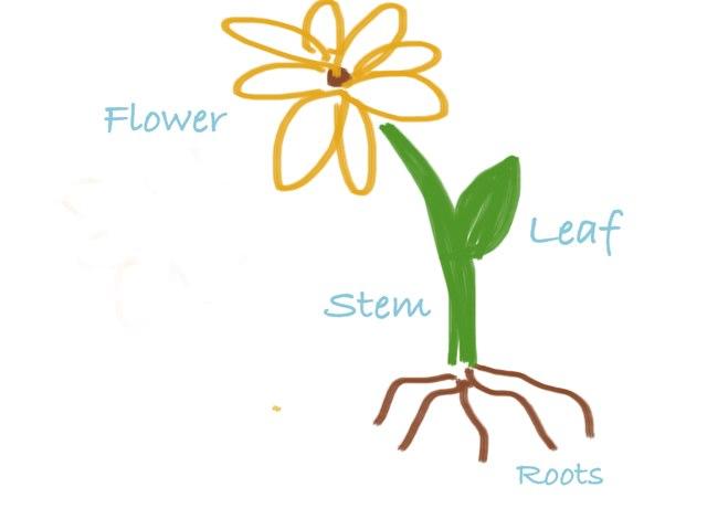 Labeling Plant Parts by Chelsea Bridges