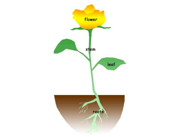 Labelling plants by David Andrews
