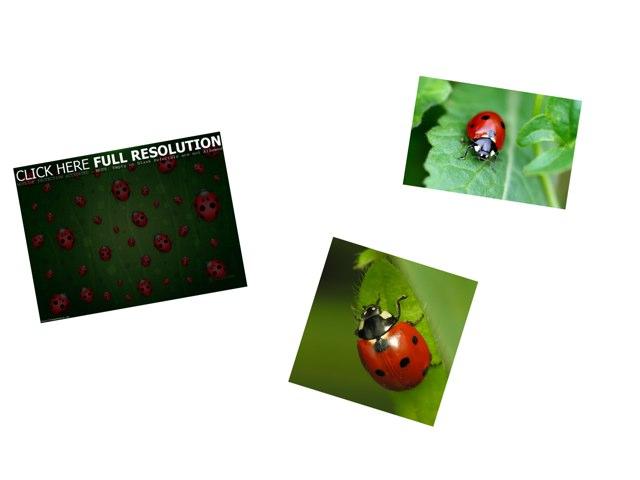 Ladybugs by Jennifer Riu