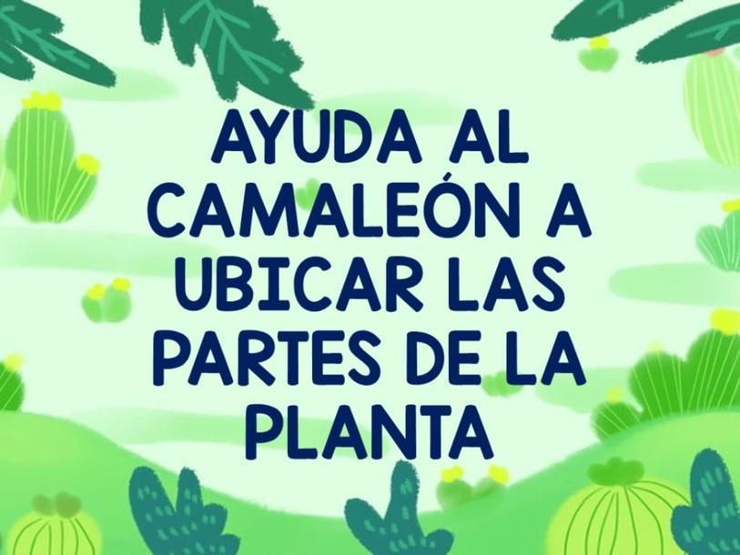 Las partes de la planta(pau ) by Valentina Castro