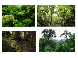 Layers Of The Rainforest  by Susan Sedro