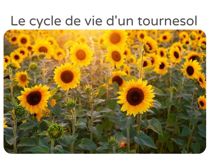 Le cycle de vie d'un tournesol by Mélanie Froment