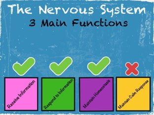 Learning About The Nervous System  by Jessica Preisig
