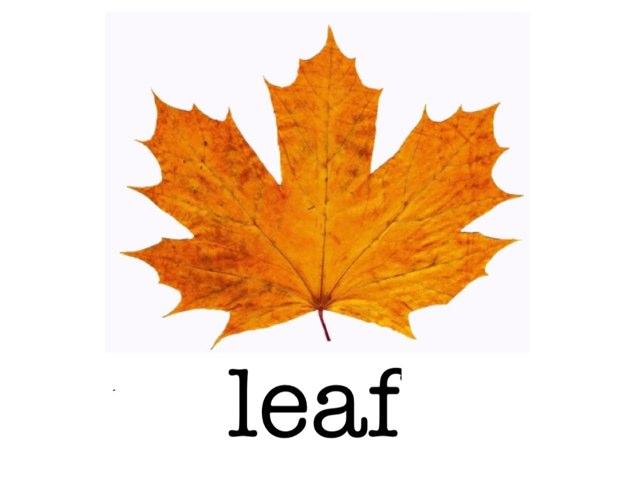 Leaves by Jude Puertas