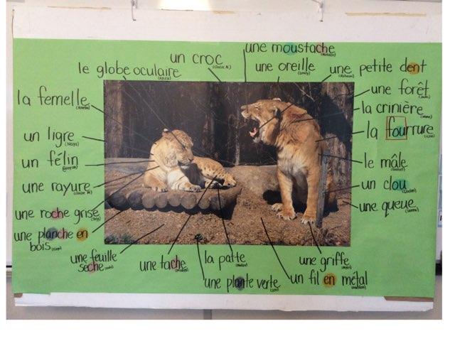 Les Ligres by Natalie Stewart