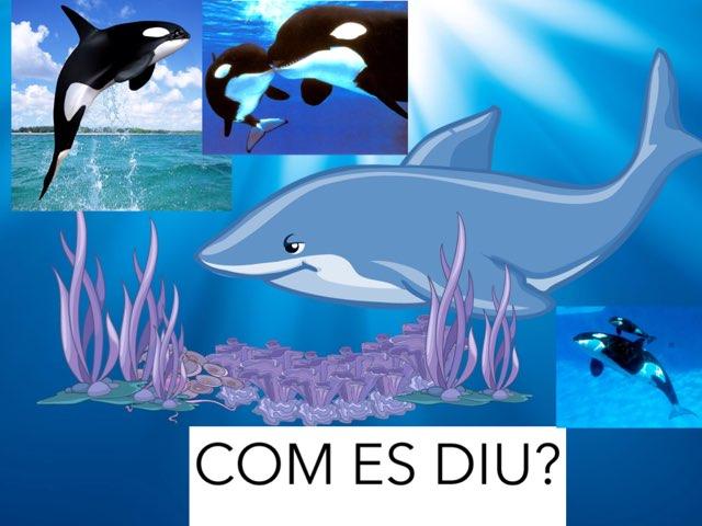 Les Orques P5 La Farigola Com Es Diu? by Alejandro Romero Naranjo