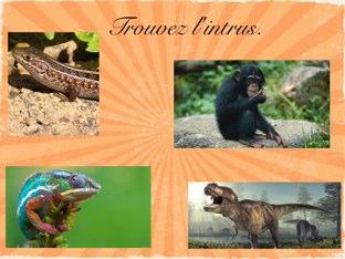 Les classes d'animaux by Jeanne S.