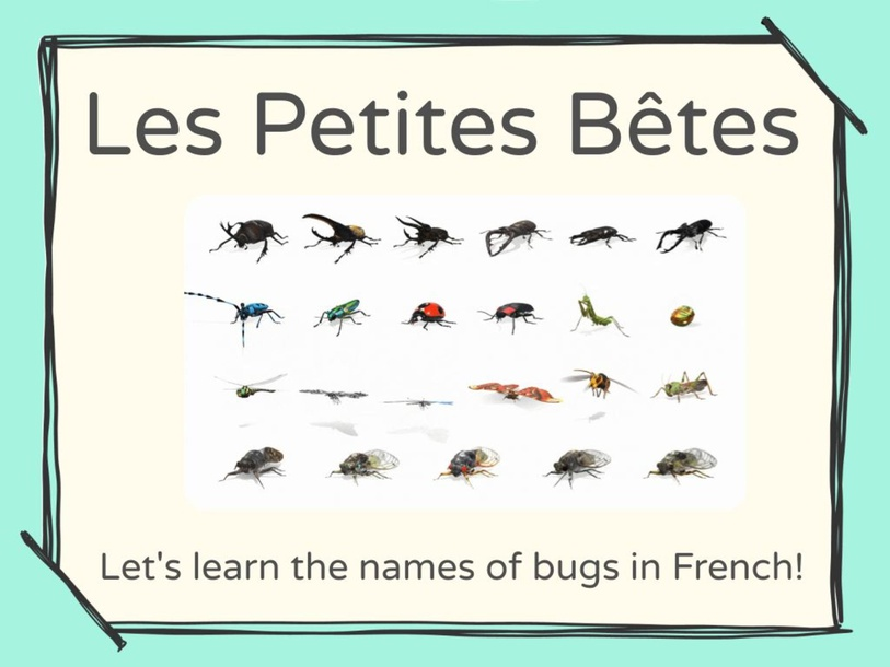 Les Petites Bêtes - Bugs in French by Amelie Thompson