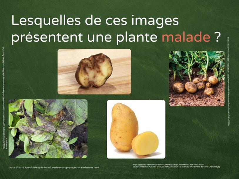 Les maladies des plantes by SAAC FSAA Université Laval