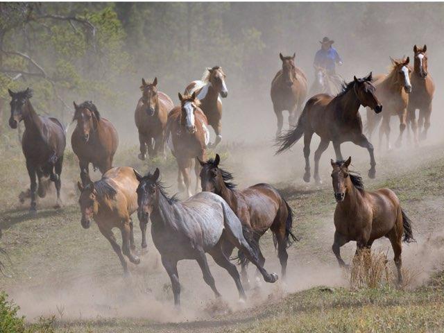 Leuke Paarden Puzzels by Isa Galbu