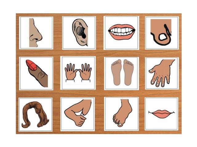 Lichaamsdelen by Gino Vanherweghe