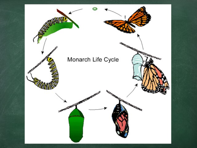 Life Cycle Of A Butterfly by Sheila labriola