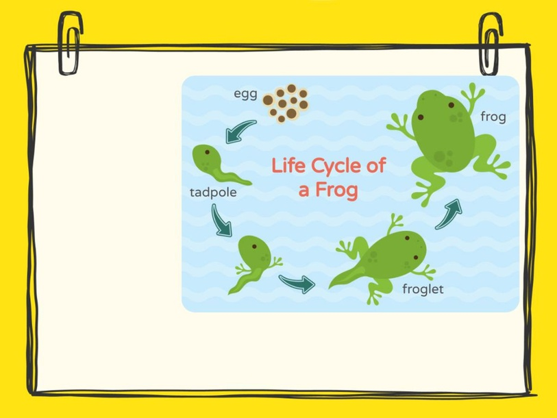 Life Cycle of Animals by Kate Dickson