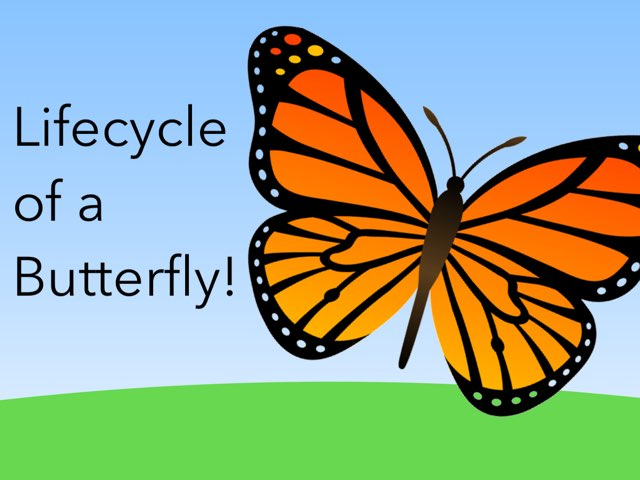 Lifecycle Of A Butterfly by Emily Metzer