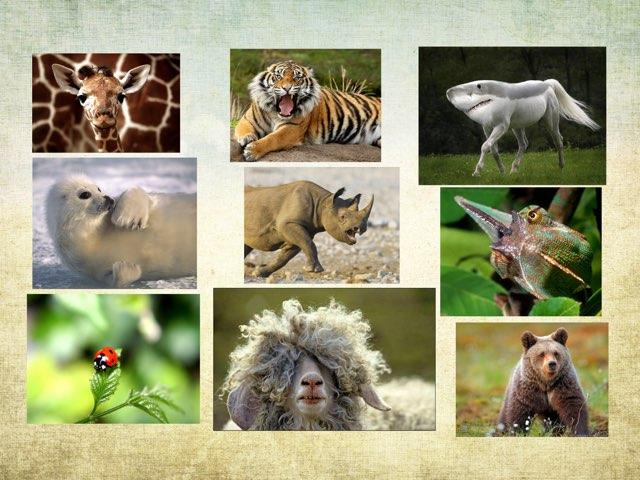 Los Animales by Curso CFTIC