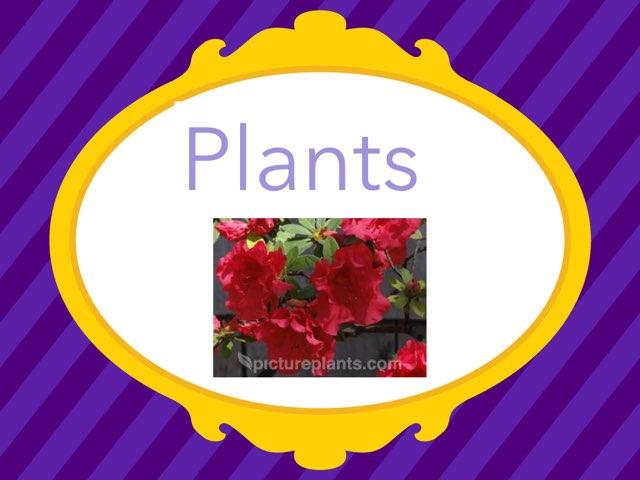 Lydia Plants by Hulstrom 1st Grade