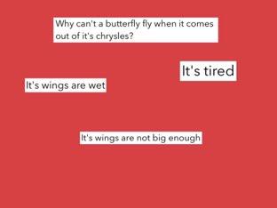 M.T 19 butterfly quiz by Courtney Durbin