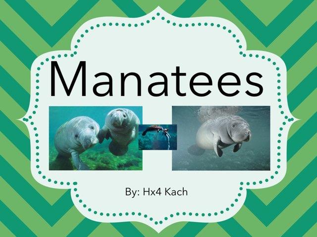 Manatees by hx4 kach