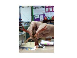 Marcus's Crayfish Quiz by Debra  Joyce
