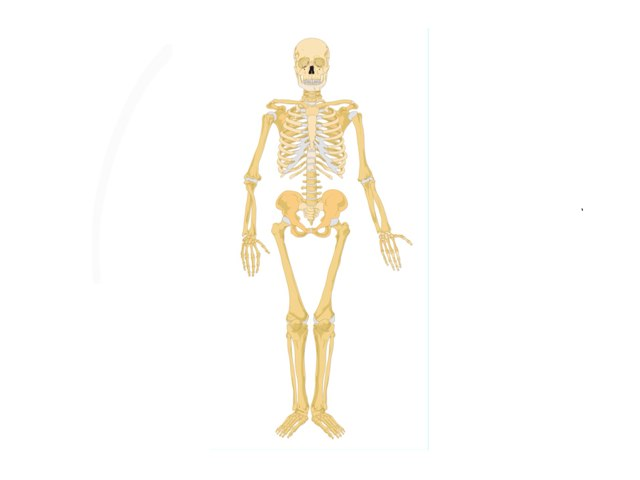Matthew Skeleton by Mr Parkinson