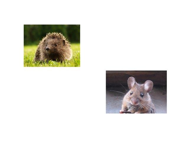 Maus  oder Igel by Katharina Weeber