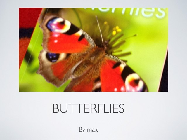 Max's Butterflies by P302 SAS