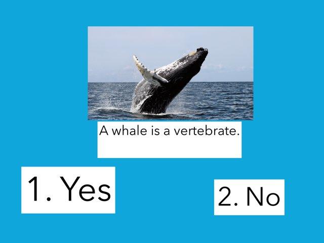 Mbl Whales by Linda Lonergan