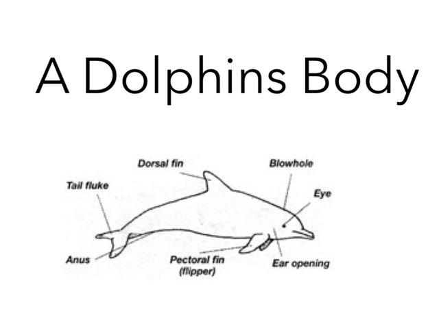 Meghan's Dolphins by Keegan scelia