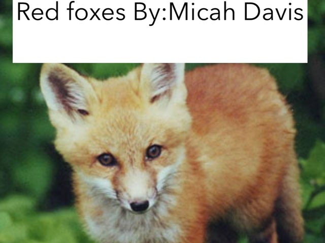 Micah by Jane Miller _ Staff - FuquayVarinaE