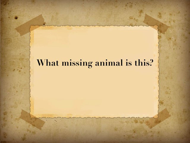 Missing Animal 6 by Ingles oswald