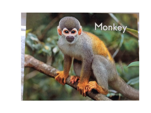 Monkey  Fill In  LLI HCPSS by Chanel Sanchez