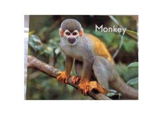 Monkey  Sight Words LLI HCPSS   by Chanel Sanchez