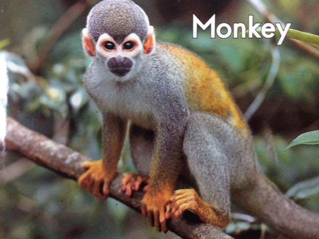 Monkey LLI Green Book 16 A by Chanel Sanchez