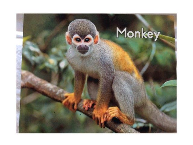 Monkey Sequencing LLI HCPSS by Chanel Sanchez