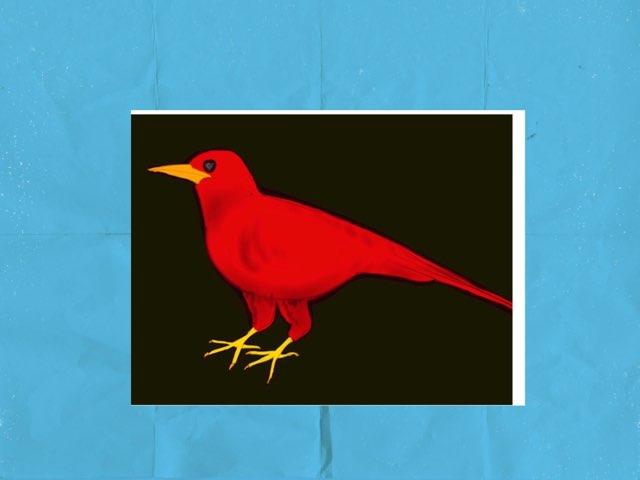 Mr Levenhagen's bird quiz by Brad levenhagen