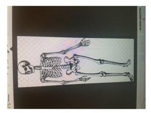 Mr Skeleton by Beth Ellen